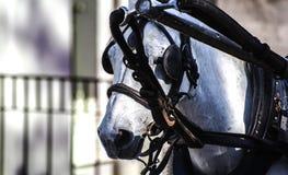 Cavalo andaluz com faróis intermitentes e rédeas imagem de stock