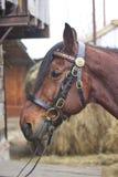 Cavalo aproveitado Chicote de fios do cavalo produtos do couro e, feitos a mão Fotografia de Stock