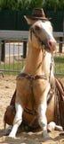 Cavalo assentado imagens de stock
