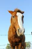 Cavalo atrás da cerca Imagem de Stock Royalty Free
