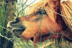 Cavalo atrás da cerca Fotografia de Stock Royalty Free