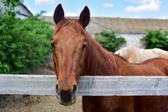 Cavalo atrás de uma cerca imagem de stock
