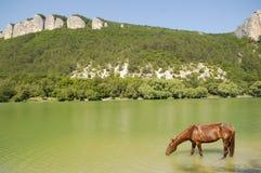 Cavalo bebendo Foto de Stock Royalty Free