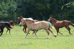 Cavalo bonito Fotografia de Stock