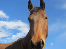 Cavalo bonito Foto de Stock Royalty Free
