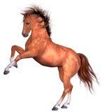 Cavalo bonito Fotos de Stock Royalty Free