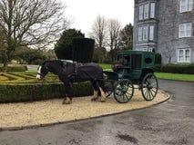 Cavalo bonito de Clydesdale com carrinho Foto de Stock