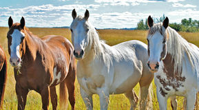 Cavalo bonito em seu prado fotos de stock