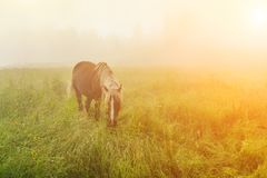 Cavalo bonito na névoa no alvorecer nas montanhas Imagens de Stock Royalty Free