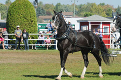 Cavalo bonito no país justo foto de stock