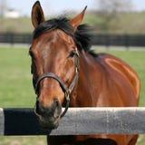 Cavalo bonito no pasto Imagem de Stock