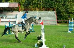 Cavalo branco bonito e salto do passeio do jóquei da jovem mulher sobre o gancho no esporte equestre outubro - 05 2017 Novi trist Imagens de Stock