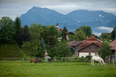 Cavalo branco e preto Imagens de Stock