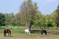 Cavalo branco e preto de Brown Fotos de Stock Royalty Free
