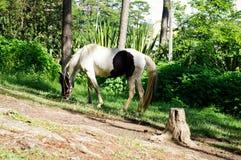 Cavalo branco em um monte Fotografia de Stock Royalty Free