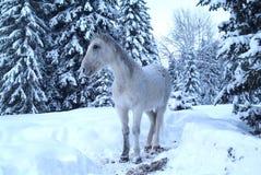 Cavalo branco entre as árvores no inverno imagem de stock