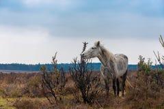 Cavalo branco magro em Forrest novo imagens de stock