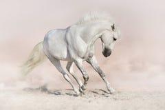 Cavalo branco no backround claro foto de stock royalty free