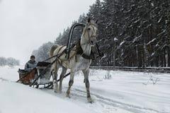 Cavalo branco no chicote de fios na estrada do woodside no inverno Imagem de Stock