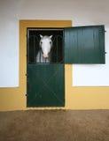 Cavalo branco no estábulo Imagens de Stock Royalty Free