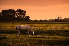 Cavalo branco no pasto no nascer do sol imagem de stock royalty free