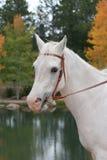 Cavalo branco por Lago Fotos de Stock Royalty Free