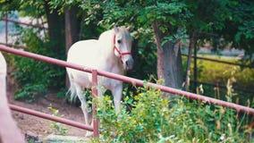 Cavalo branco que está na pena sob a árvore video estoque