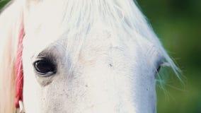 Cavalo branco que olha ao redor no dia de verão video estoque