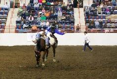 Cavalo Bucking Foto de Stock