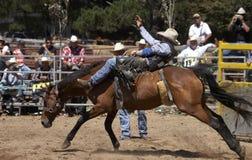 Cavalo Bucking Fotos de Stock