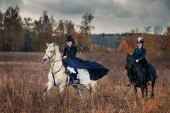 Cavalo-caça com as senhoras no hábito de equitação fotos de stock royalty free