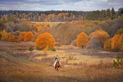 Cavalo-caça com cavaleiros no hábito de equitação Fotos de Stock