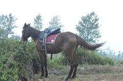 Cavalo com fome Fotos de Stock