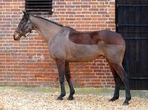 Cavalo com grampo geral foto de stock