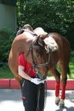 Cavalo com instrutor Fotografia de Stock