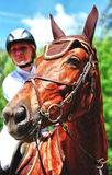 Cavalo com jóquei Imagens de Stock Royalty Free