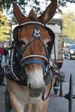 Cavalo com o carro em Nova Orleães. foto de stock