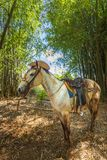 Cavalo com o chapéu de vaqueiro em Vinales, UNESCO, Pinar del Rio foto de stock royalty free