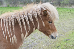 Cavalo com tranças Imagens de Stock