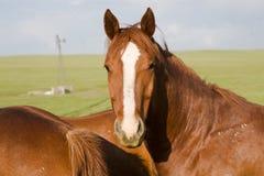 Cavalo com um olhar surpreendido foto de stock royalty free