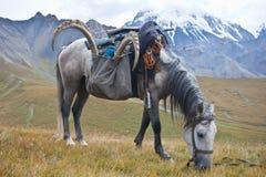 Cavalo com um troféu do íbex após a caça na montagem de Tien Shan Imagens de Stock Royalty Free