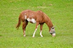 Cavalo com uma capa imagem de stock