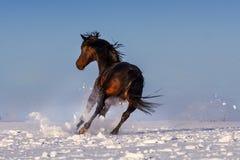 Cavalo corrido na neve imagem de stock