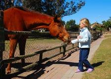 Cavalo da alimentação de crianças imagens de stock