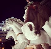 Cavalo da C.A. Fotos de Stock