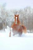 Cavalo da castanha fotografia de stock royalty free