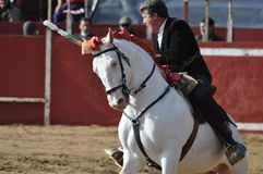 Cavalo da luta de Bull Imagens de Stock Royalty Free