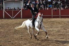 Cavalo da luta de Bull Fotos de Stock