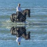 Cavalo da mulher no mar Foto de Stock Royalty Free