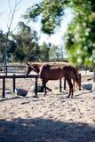 cavalo da testa amarrado para baixo fotografia de stock royalty free
